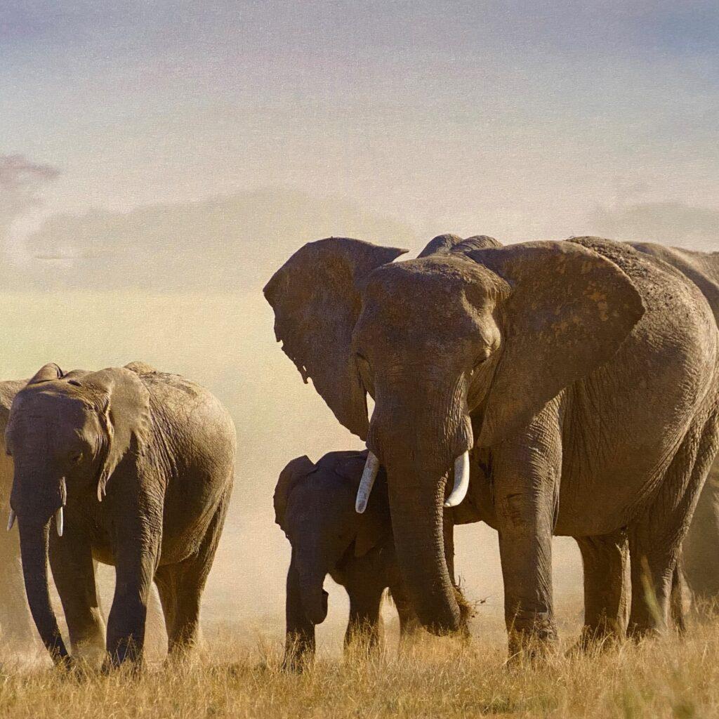 Speciaal kinderdagverblijf groep Olifant
