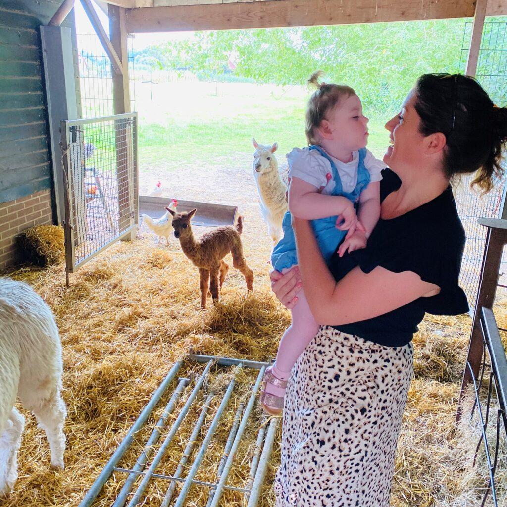 ara bij de alpaca op de boerderij